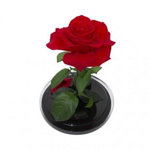Rosa Incantata Stabilizzata...