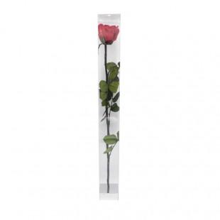Rosa Rossa Stabilizzata Con...
