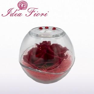 Tre boccioli di Rosa Rossa...