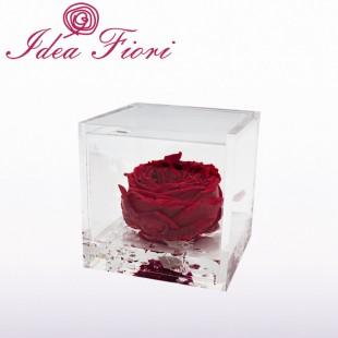 Rosa Inglese Stabilizzata...