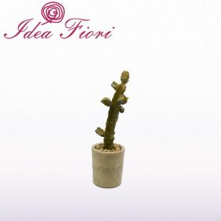 Pianta Grassa Cactus Con...