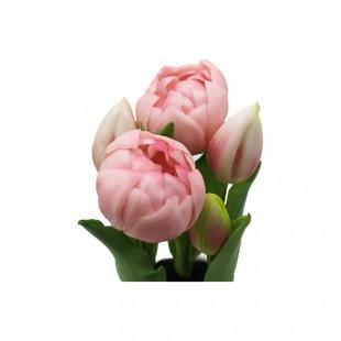 Pianta di Tulipani Rosa Con...