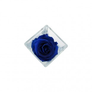 Rosa Stabilizzata Blu con...
