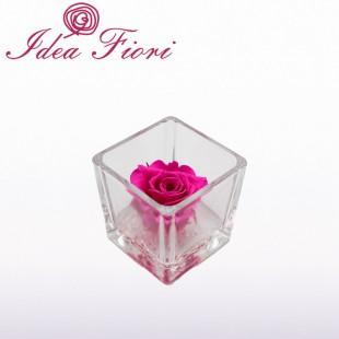 Rosa Stabilizzata Fucsia...