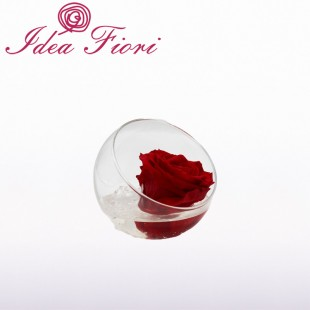 Rosa Stabilizzata Rossa in...