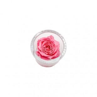 Rosa Stabilizzata Rosa in...
