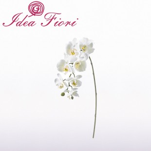 Ramo di Phalaenopsis Bianco...
