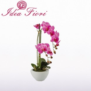 Phalaenopsis in vaso Fucsia...