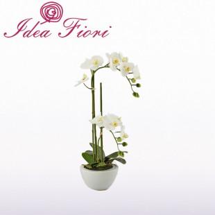 Phalaenopsis in vaso Bianca...