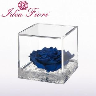 Rosa Stabilizzata Blu...