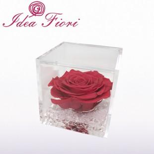 Rosa Stabilizzata Corallo...