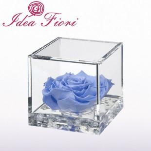 Rosa Stabilizzata Azzurra...