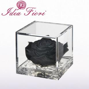 Rosa Stabilizzata Nera...