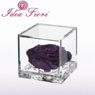 Rosa Stabilizzata Viola...