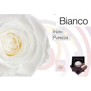 Rosa Stabilizzata Bianca...