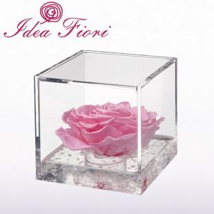 Rosa Stabilizzata Rosa...