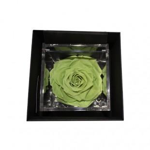 Rosa Stabilizzata Verde...
