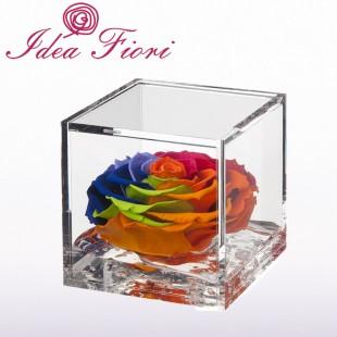 Rosa Stabilizzata Raimbow...