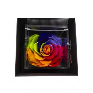 Rosa Stabilizzata Rainbow...