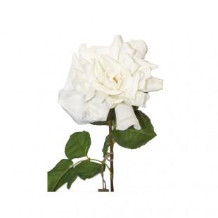 Rosa Aperta Bianca Tuch...