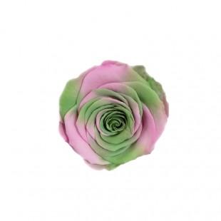 Rosa Stabilizzata...