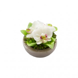 Candela Orchidea Bruco