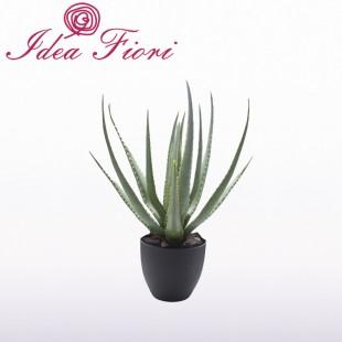 Pianta Aloe Vera Enzo De...