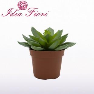 Pianta Grassa Succulenta...