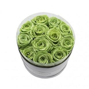 Box da 12 Rose Verdi...