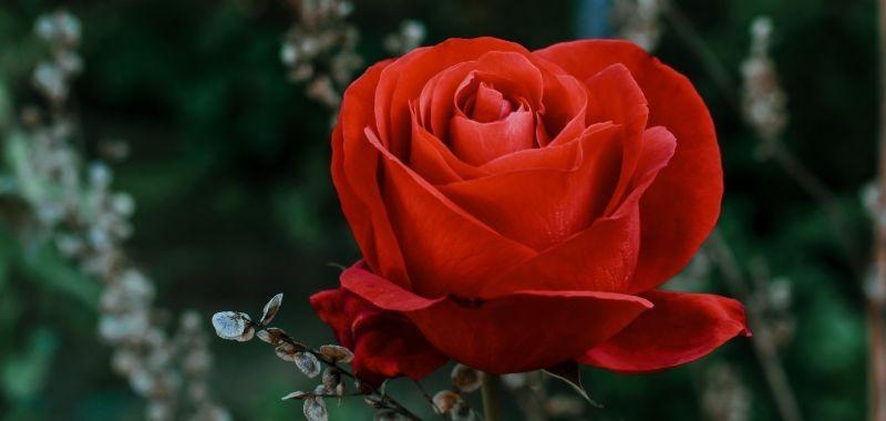 Rosa artificiale che dura nel tempo – idea fiori