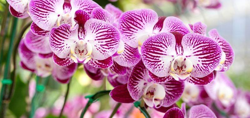 Orchidea artificiale che dura nel tempo – idea fiori