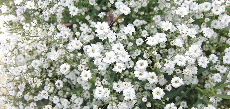 Nebbiolina artificiale – idea fiori